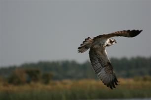 Monitoringsrapport Lauwersmeer